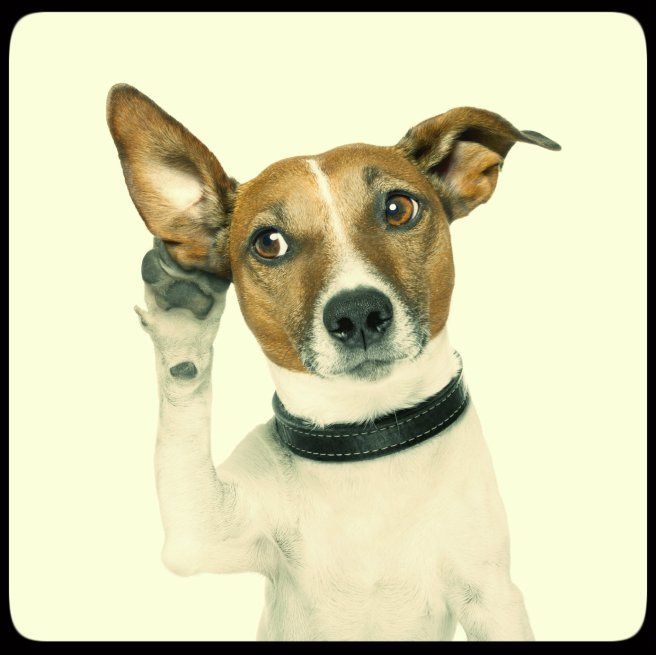dog active-listening